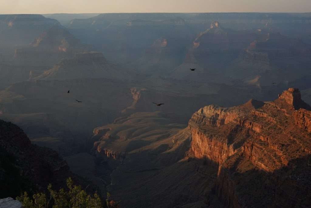 Golden hour in the Grand Canyon
