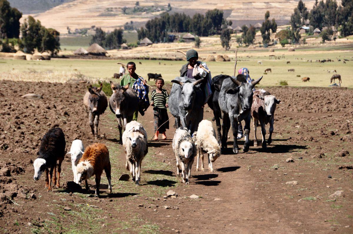 Lalibela highlands hike