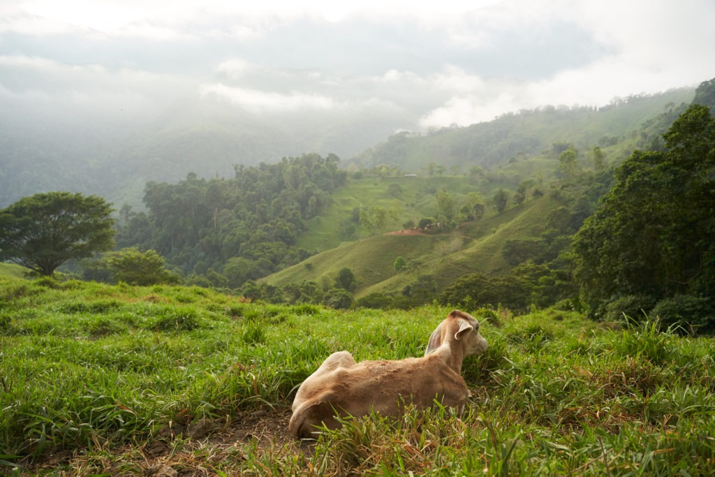 Green grass and misty mountains near the jungle