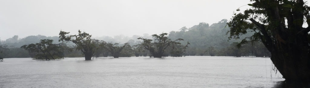 Rainy rainforest