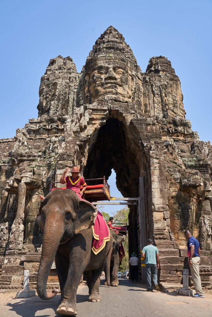 Elephants in Angkor