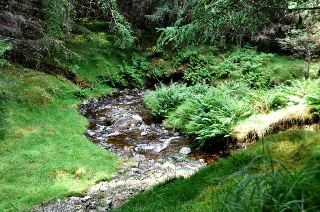 Forest near Tyndrum