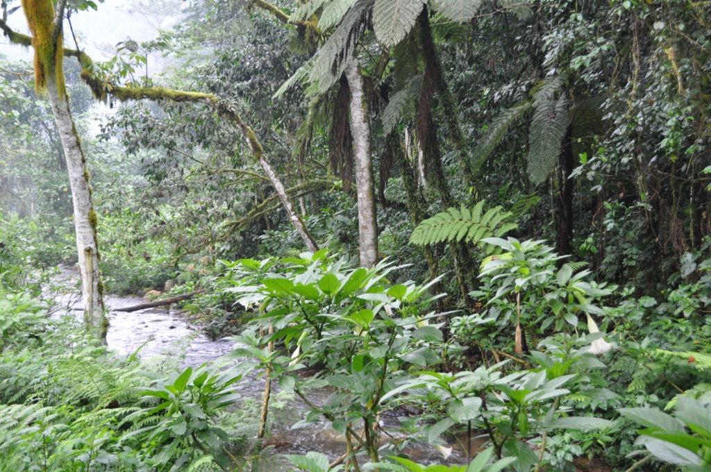 The beautiful jungle of Bwindi