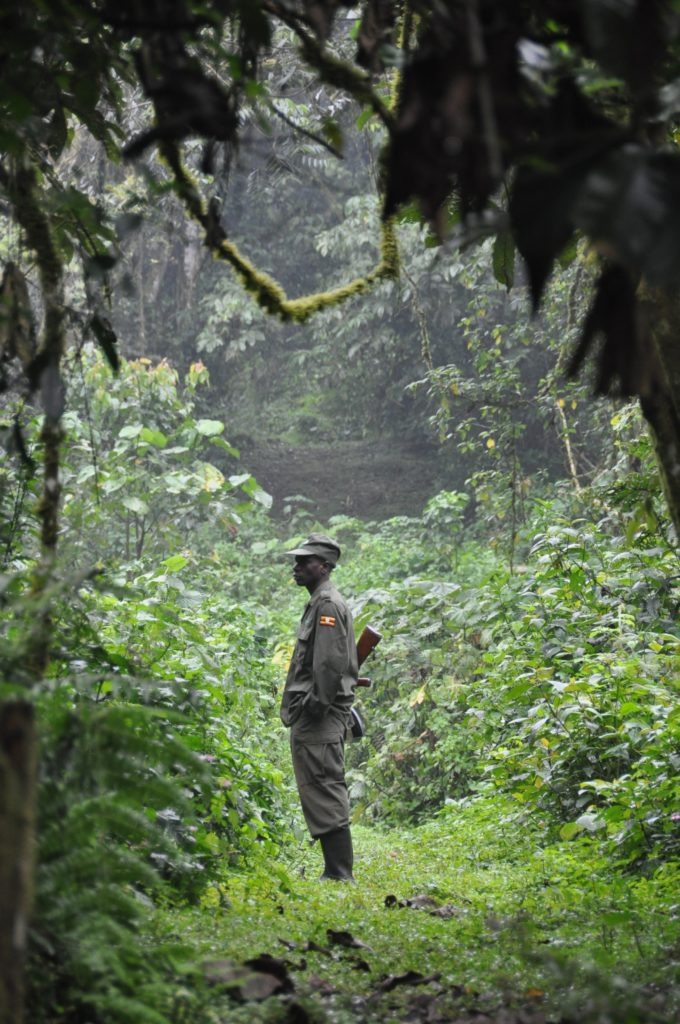 Ranger in Bwindi Impenetrable Forest