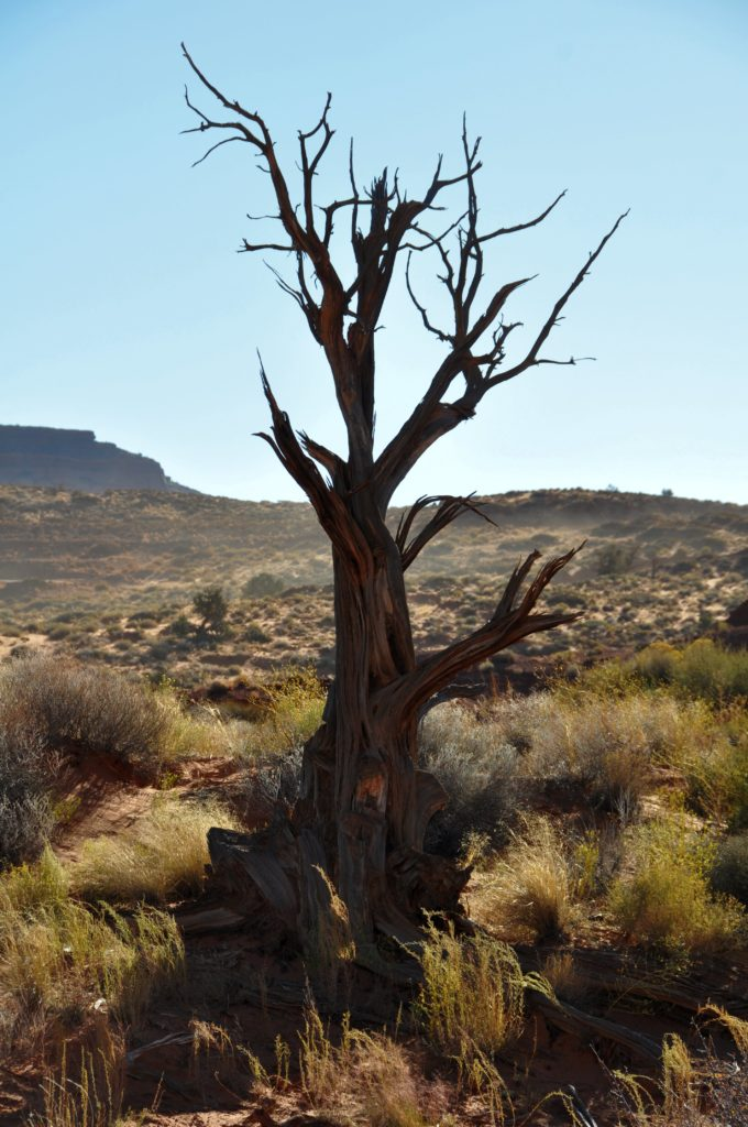 Dead tree in Monument Valley