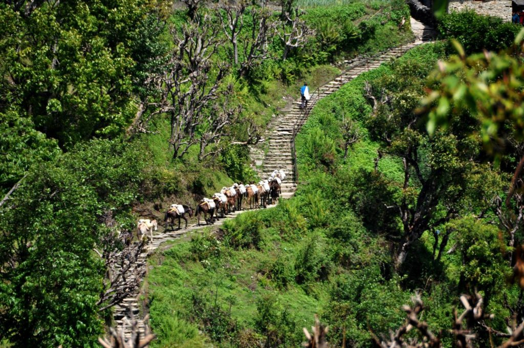 Mule train in the Annapurna Mountains