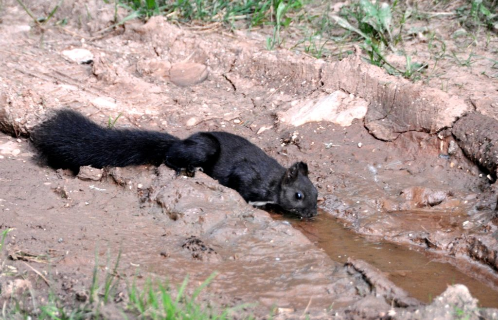 Squirrel in Durmitor National Park