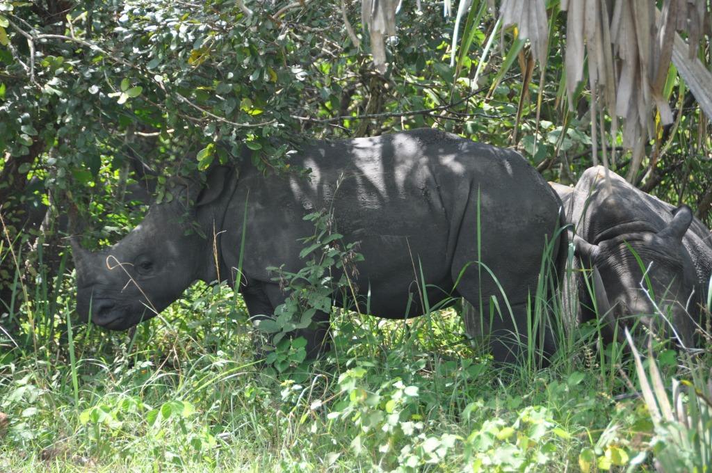 Rhino at the Ziwa Rhino Sanctuary in Uganda